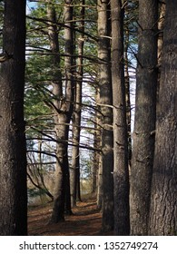 Different Layers Of Tree/ A Trail At Olde Izaak Walton Park, Leesburg, Virginia
