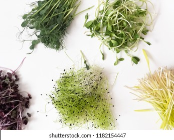 different microgreens on white background