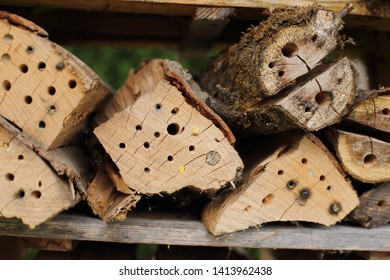 Different nests of Wild bees in a insect hotel