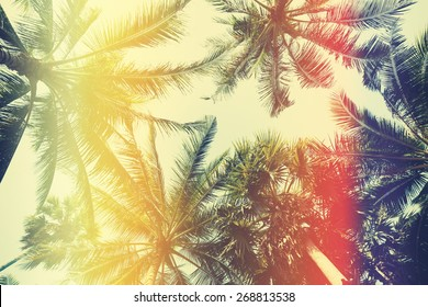 Different palm trees, view from ground, vintage stylized with film light leaks