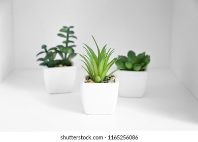 Different plants in pots on white shelf