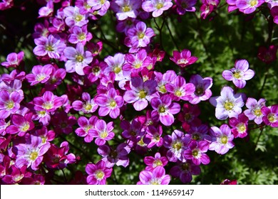 Purple flower with yellow center images stock photos vectors different shades of small pink flowers with a yellow center mightylinksfo