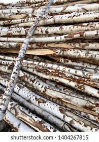 Different sizes of birch wood branches piled and prepared for chooping.