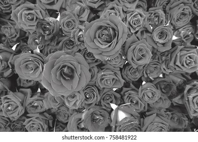 Different sizes of rose for flower arrangement.