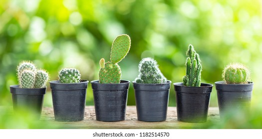 Different small cactus in plastic pot on wooden table with green nature blur background