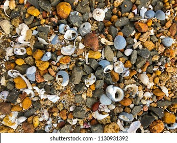 Different small seashell, rocks, pebbles on sandy coastal area by the sea