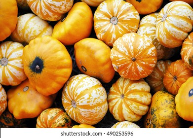 different sorts of mini pumkins in fullframe background.
