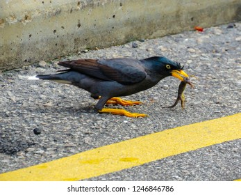Different species of birds in the streets of Singapore