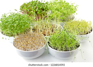 Different sprouts in white bowls. Sprouting microgreens. Shoots of alfalfa, Chinese cabbage, garlic, kale, lentils and radish in potting compost. Green seedlings, young plants, cotyledons. Food photo.