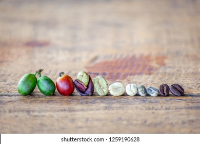 The different stages of coffee beans