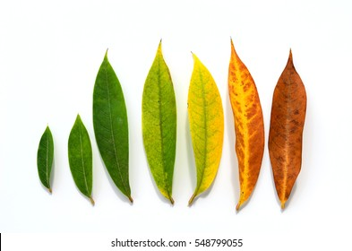 Different stages of life - Birth to death. Concept of growth leaf on white background