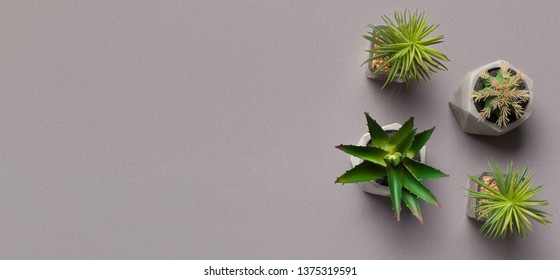 Different succulents and cactus plants in pots on grey background with copy space, panorama