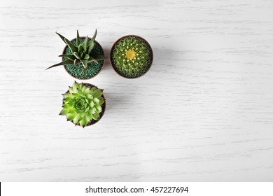 Different succulents and cactus in pots on light wooden background