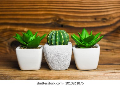 Different succulents and cactus in pots. Rustic Background