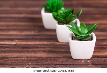Different succulents and cactus in wite pots on wooden background