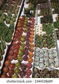 Different succulents, Lots of colorful succulents, small cactus flowers, terrarium plants, cacti, suculents, diy gifts