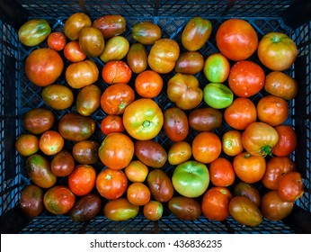 Different Tomatoes In Box