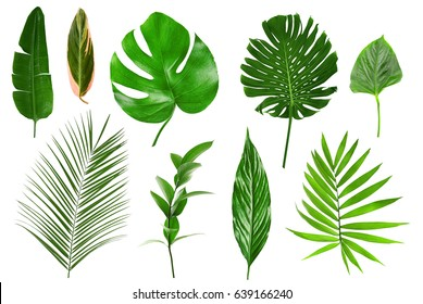 Photo of Different tropical leaves on white background