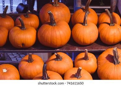 Different type of pumpkins.