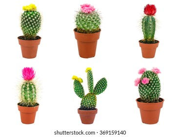 different types of cactus isolated on white background