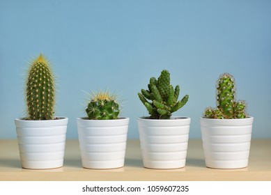 Different types of  cactus in pots on table