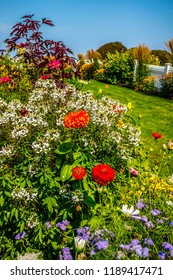 Different types of flower in the yard of Ogunquit, Maine