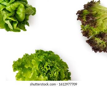Types Lettuce Images Stock Photos Vectors Shutterstock
