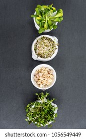 Different types of micro greens in white bowls for sauces on slate background. Fresh garden produce organically grown, symbol of health and vitamins. Microgreens ready for cooking. Free copyspace