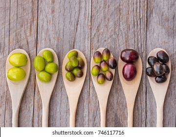 Different types of olives from green to black