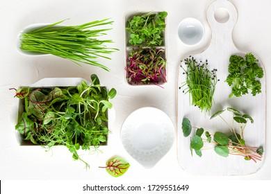 Différents types de germes de microverts organiques. Concept végétarien, propre et sain de l'alimentation. La germination des graines à la maison.