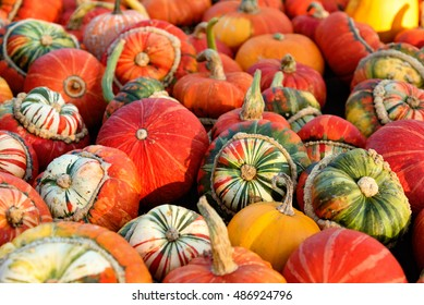 Different types of pumpkins after harvesting