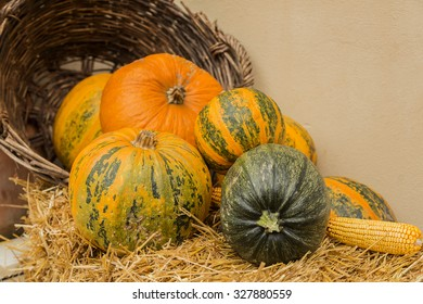 Different types of pumpkins on different color and forms