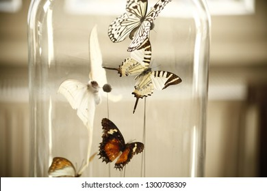 Different types of stuffed butterfly under a glass dome in front of a white backround