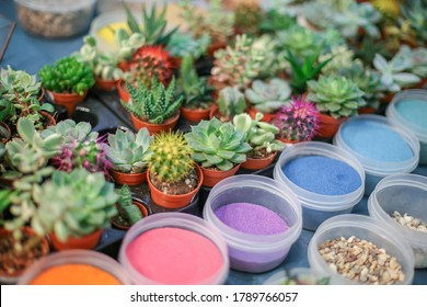 A lot of different types of succulents, jars with colorful sand, moss, pebbles. Masterclass, workshop for kids, adults. Planting flowers in handmade glass vase, florarium. Decoration for home table.