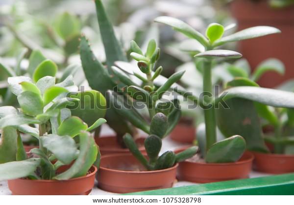 Different Types Succulents Pots Stock Photo Edit Now 1075328798