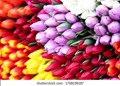 Different types tulips, bright spring flowers. Expected Floral Present. Growing tulips in quarantine. Making beautiful bouquets. Floristics courses. Self-isolation floristry online training