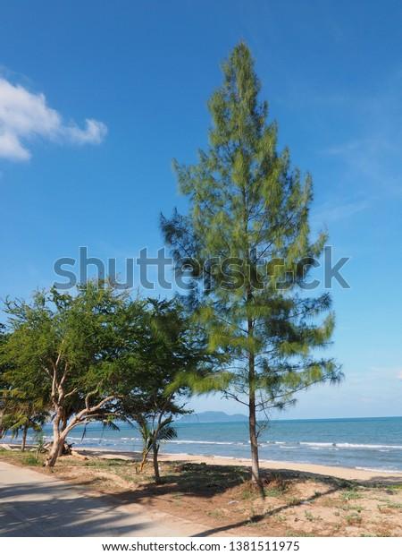 different-types-vegetation-on-gulf-600w-