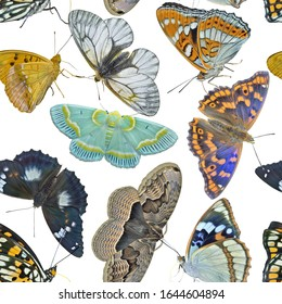 The different variegated butterflies. Seamless pattern on white background, own isolated photographs of the author of the pattern are used.