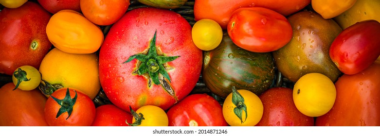 Different varietiBanner. es of yellow red tomato, flat lay. Fresh colorful tomatoes background, close up. Best Heirloom Tomato mix. Delicious Heirloom Tomatoes