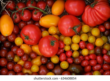 Different varieties of ripe tomato harvest