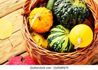 Different varieties of squashes and pumpkins in basket.Autumn harvest.