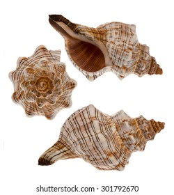 The different views of sea shells isolated.