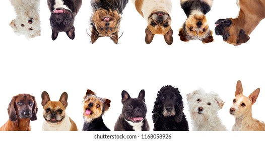 Differents dogs looking at camera isolated on a white background
