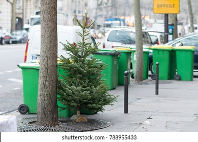 Difficult Christmas trees dumped and discarded on the streets of Paris.
