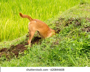 Digging dog, thrust the head into a hole outdoor
