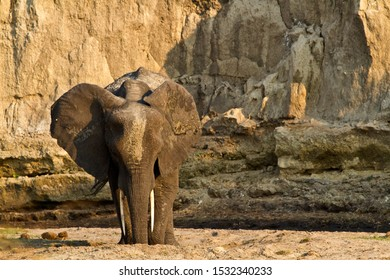 Digging in the sandy river bed for clean, filtered water is one of many benefits elephants bring to a habitat by making water available to a myriad of wildlife.
