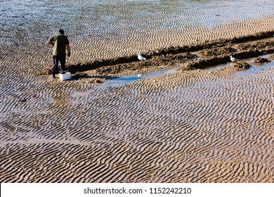 Digging trenches in the inter-tidal beach sand searching and collecting lugworms, sea anglers fishing bait for cod looked on by seagulls.
