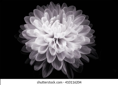 digital art: shiny flower against black background