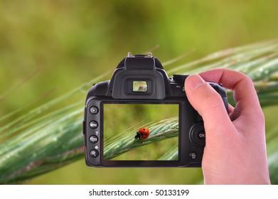 Digital camera in hand