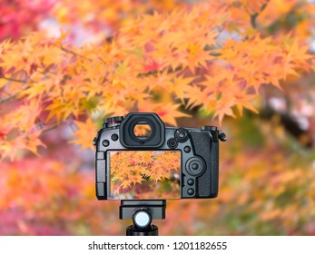 Digital camera over tripod on blur maple leaf background taking photo for autumn leaves in the garden at Tokyo, Japan